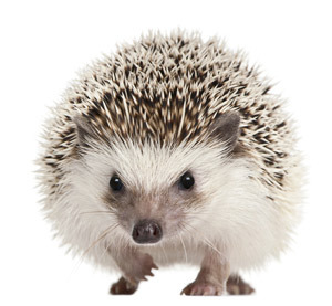 Spines everywhere... A transcription factor called 'Sonic Hedgehog' caused stem cells to develop into medium spiny neurons