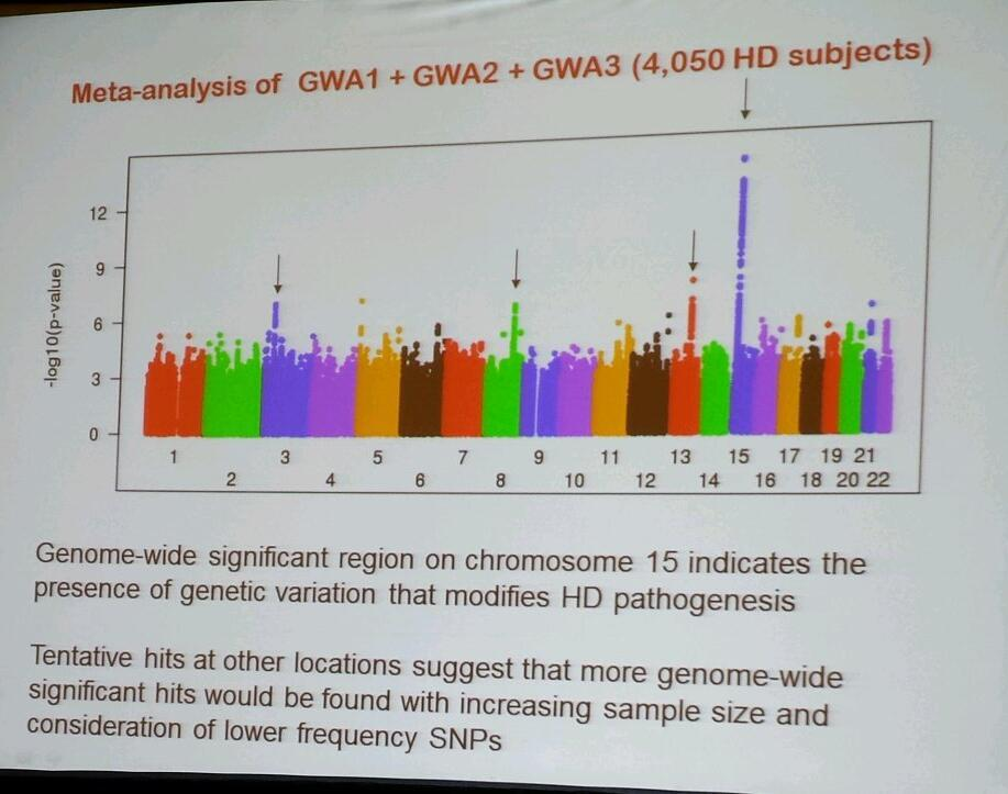This 'Manhattan plot' shows Gusella's data, from over 4,000 patient volunteers, suggesting that a genetic modifier may be found on chromosome 15.