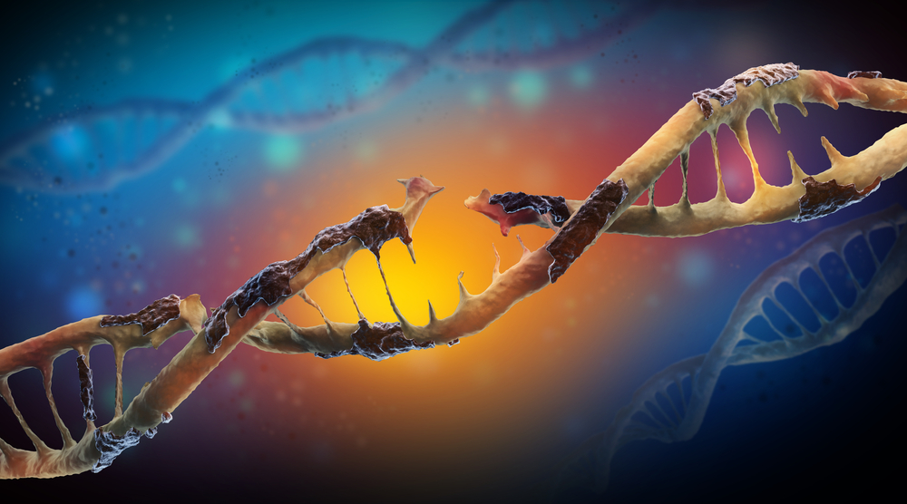 DNA damage is a physical change to the DNA, like a break in the twisting ladder, or some biological goo that's stuck to the code