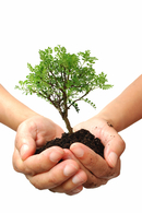 Planting trees together: The 2016 Huntington's Disease Society of America Convention