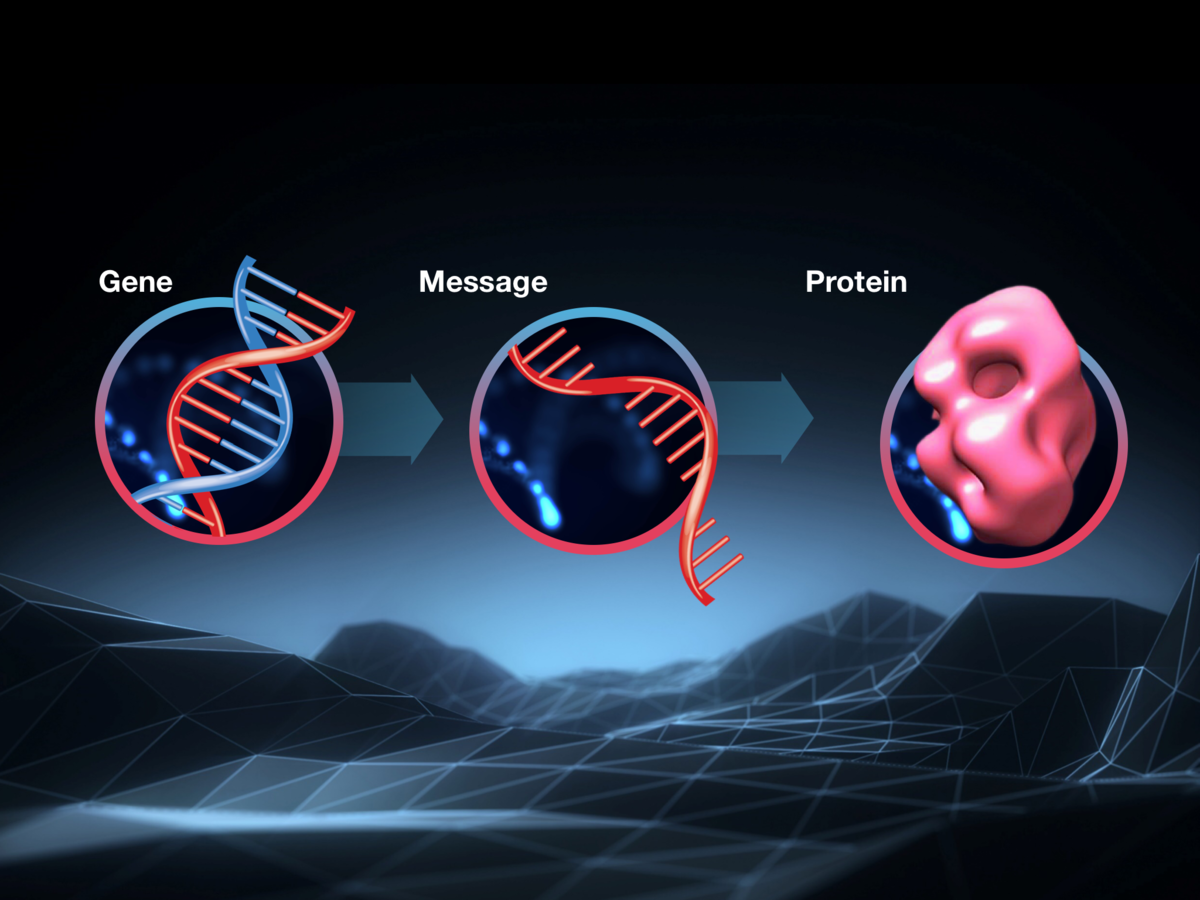 The link between DNA, RNA and Protein - everything you need to know about molecular biology.