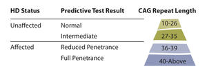 A table summarizing the different possible results of a predictive HD gene test.