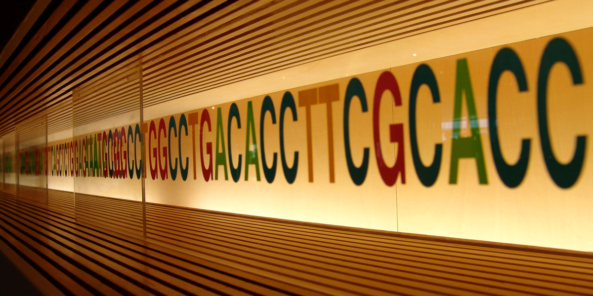 Uncovering the dark side of DNA repair to design HD treatments