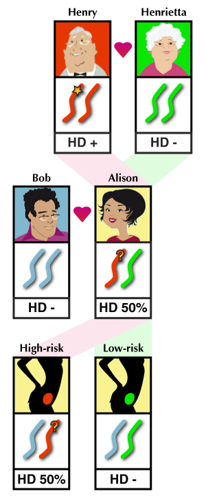 How exclusion testing works. Any fetus conceived by Alison and Bob will inherit a copy of chromosome 4 from either Henry or Henrietta. Chromosomes inherited from Henry may carry the HD mutation. Exclusion testing reveals which pregnancies have inherited Henrietta's copy of chromosome 4 and are therefore 'low risk' for inheriting the disease.